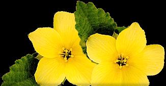 Header Flowers